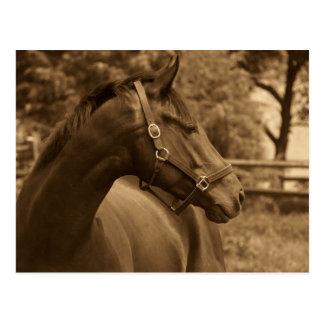 Pferd meines Herzens Postkarten