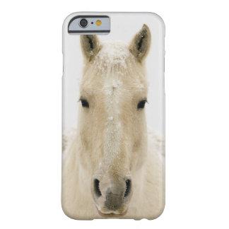 Pferd mit Schnee auf Kopf Barely There iPhone 6 Hülle