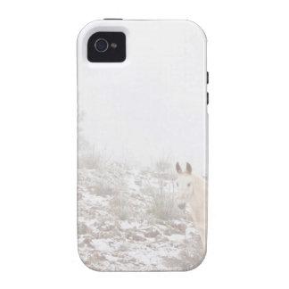 Pferd mit Winter-Jahreszeit-Schnee und Nebel iPhone 4 Hülle
