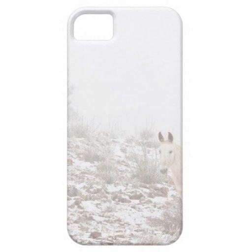 Pferd mit Winter-Jahreszeit-Schnee und Nebel iPhone 5 Schutzhüllen