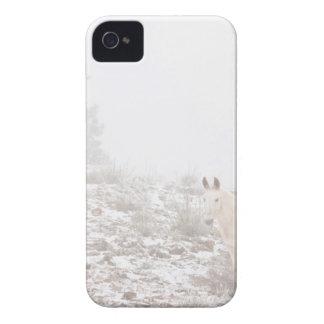 Pferd mit Winter-Jahreszeit-Schnee und Nebel iPhone 4 Case-Mate Hülle