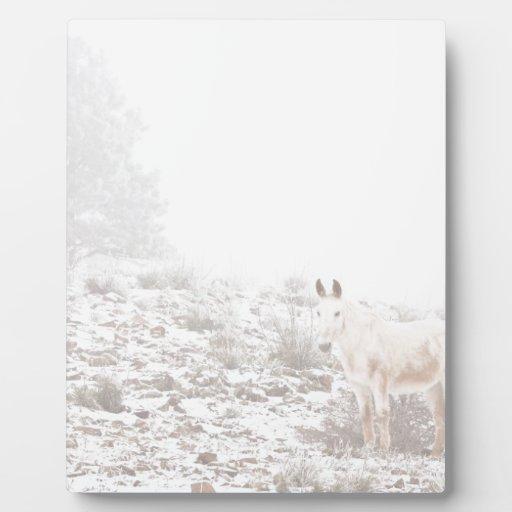 Pferd mit Winter-Jahreszeit-Schnee und Nebel Platte