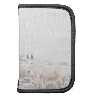 Pferd mit Winter-Jahreszeit-Schnee und Nebel Mappe