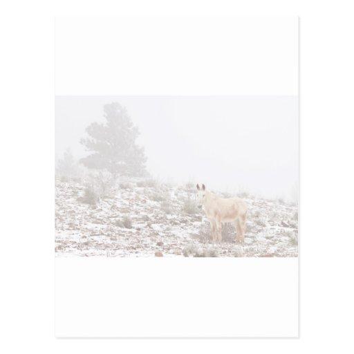 Pferd mit Winter-Jahreszeit-Schnee und Nebel Postkarte