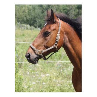 Pferd Postkarte