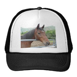 Pferd über Zaun Netzmütze