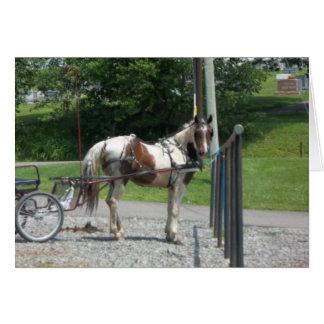 Pferd und Buggy Grußkarte