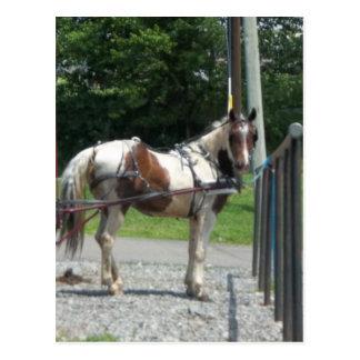 Pferd und Buggy Postkarten