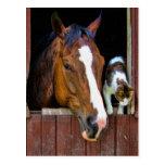 Pferd und Katze Postkarten