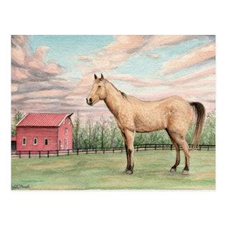 Pferd und rote Scheune Postacard Postkarte