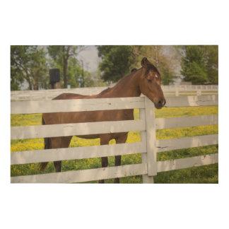 Pferd wartete durch den Zaun Holzleinwand