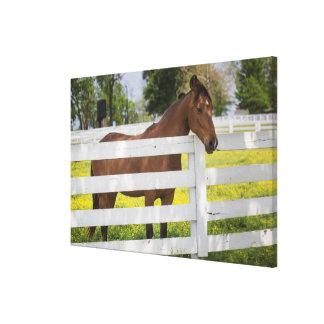Pferd wartete durch den Zaun Leinwanddruck