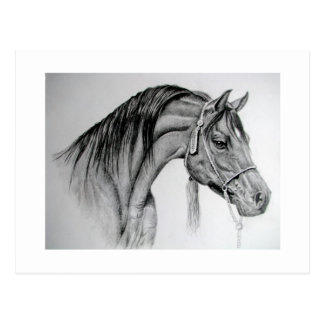 Pferdaraber Ian Postkarte