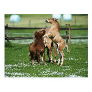 Pferde 3 postkarte