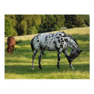 Pferde am Abend Postkarte