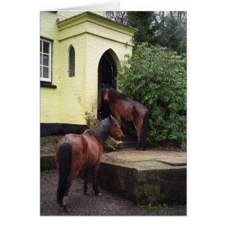 Pferde an einer Kneipe Karte