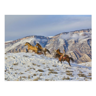 Pferde-Antrieb durch den Schnee 3 Postkarte