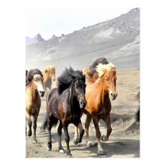 Pferde, die auf Erfolg sich bewegen Postkarte