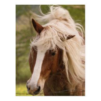 Pferde, die in der Wiese, Cades Bucht, groß weiden Postkarte