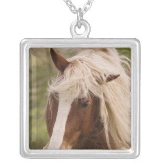 Pferde, die in der Wiese, Cades Bucht, groß weiden Versilberte Kette