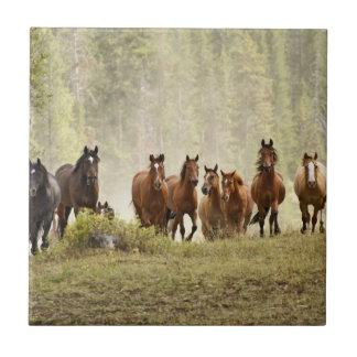 Pferde, die kleinen Hügel während der Keramikfliese