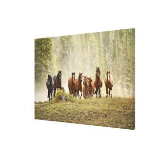Pferde, die kleinen Hügel während der Leinwanddruck