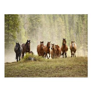 Pferde, die kleinen Hügel während der Postkarte