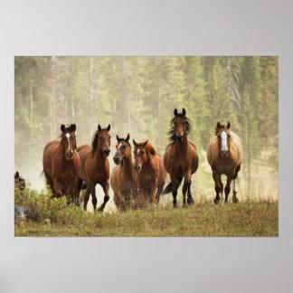 Pferde, die kleinen Hügel während Zusammenfassung, Plakat