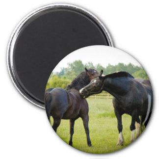 Pferde, die Magneten weiden lassen Runder Magnet 5,7 Cm