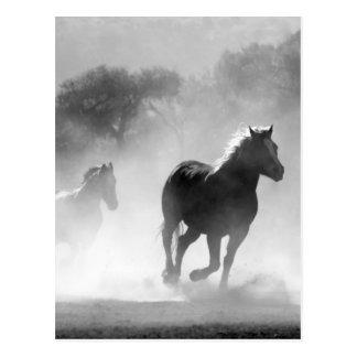 Pferde, die schöne Schwarzweiss-Landschaft laufen Postkarte