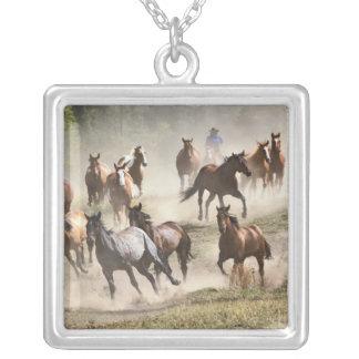 Pferde, die während der Zusammenfassung, Montana Versilberte Kette