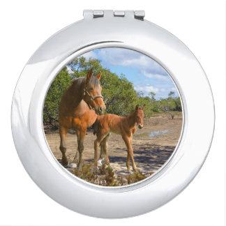Pferde, Fohlen mit Stute Taschenspiegel