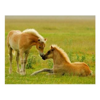 Pferde fohlt auf dem Gebiet Postkarte
