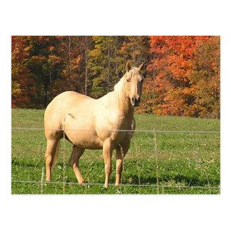 Pferde im Fall Postkarte