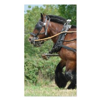 Pferde im nahen hohen Foto des Geschirrs Visitenkarten