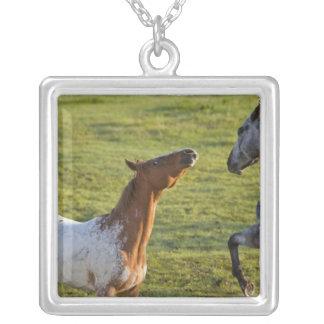 Pferde in der Weide nahe Polson, Montana Versilberte Kette