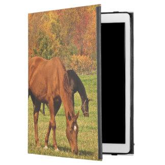Pferde in Herbst iPad Profall