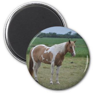 Pferde Runder Magnet 5,1 Cm