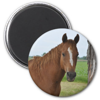 Pferde Runder Magnet 5,7 Cm