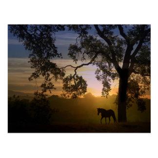 Pferde-und Eichen-Postkarte Postkarte
