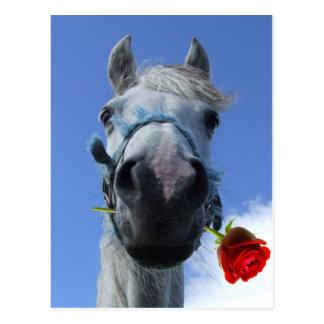 Pferde- und Rosen-Liebethema Postkarte