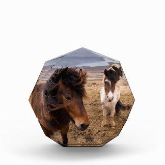 Pferde von Island Acryl Auszeichnung