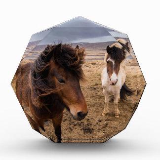 Pferde von Island Auszeichnung