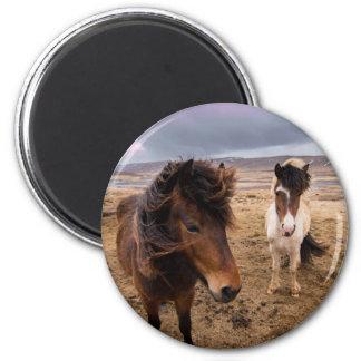 Pferde von Island Runder Magnet 5,1 Cm