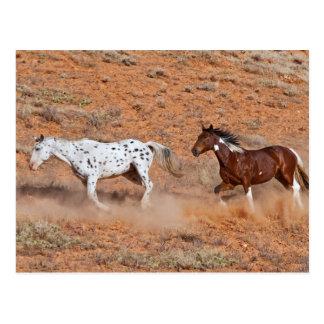 Pferde, welche die große Horn M.Ü. der Muschel Postkarte