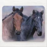 Pferde wild u. wunderbares Mousepad