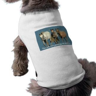 Pferde wild und wunderbare Haustier-Kleidung Haustierbekleidung