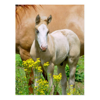 Pferdeartige Kunst-Postkarte Postkarte
