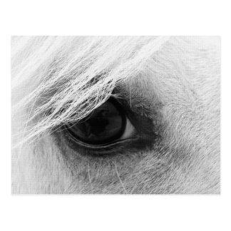 Pferdeauge in Schwarzweiss Postkarten