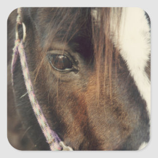 Pferdeaugen-Ansicht Quadratischer Aufkleber